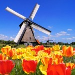 Dutch-windmills-with-vibrant-tulips