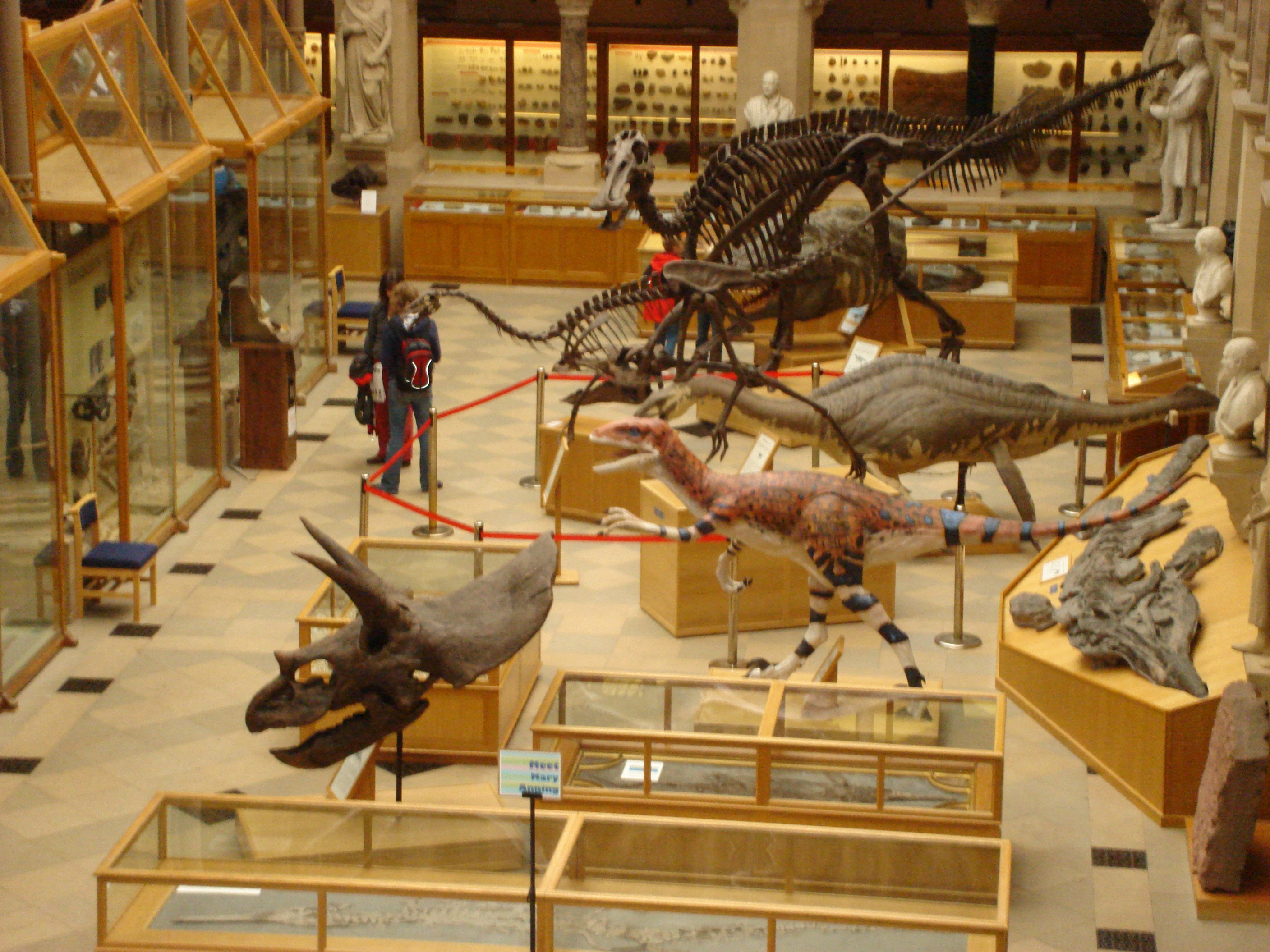 Dinosaurs in Oxford University Museum
